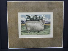 Sheep c1890 Matted Ready To Frame S2 #02 Cotswold Buck