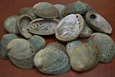 """100 PCS NATURAL GREEN ABALONE SEA SHELL (ONE SIDE POLISHED) 2 1/2"""" - 3"""" #7116G"""