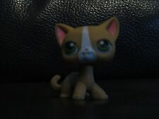 RARE LITTLE PETSHOP / LPS / CAT / CHAT EUROPEEN SHORT HAIR KITTY / LPS 72 !!!