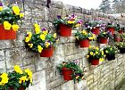 """GARDENING GIFT 6 PLANT POT HOLDERS TO HANG 5"""" FLOWER POTS ON A WALLS & FENCES"""