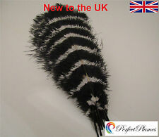 Ostrich Feathers 16-18 stripey wedding centrepiece craft coloured fancydress