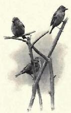 Wild Life Study and Photograph It Book CD 1898 Bird