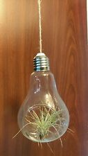 Light Bulb Glass with 5 Air Plant Terrarium Container Best Deal Home Decor