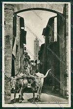 Siena San Gimignano Costumi COLLA Carro Buoi Foto cartolina QQ1858