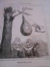 Caricature 1876  Parait bien Mure la poire !!!