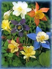 Columbine (Aquilegia Caerulea) - Mix colors- 100 Seeds