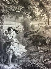 Celuta poursuivi par les alligators Gilquin et Dupain circa 1859