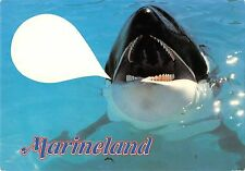 BT9208 marineland france orque   animal animaux Killer whale