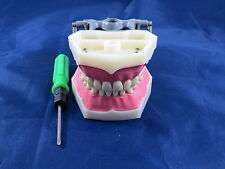 Model Anatomy Typodont Dental Type Frasaco Model FG3 DELTA PLUS