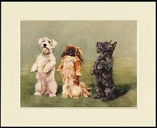 SCOTTISH SEALYHAM TERRIER PEKINGESE LOVELY DOG PRINT MOUNTED READY TO FRAME