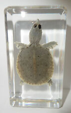 Farmed Turtle Specimen - Softshell Turtle (clear Lucite paperweight)