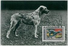 MAXIMUM CARD : animals DOG DOGS: HUNGARY 1972  -  Irish wolfhound