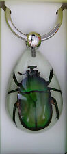 REAL INSECT GREEN CHAFER BEETLE GLOW IN DARK TEARDROP KEY RING NIJ42