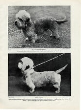 DANDIE DINMONT TERRIER NAMED TWO NAMED DOGS OLD ORIGINAL PRINT PAGE FROM 1934