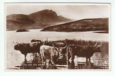 Highland Cattle Loch Fada And The Storr Rock Isle Of Skye 1931 Real Photograph