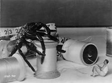 The Incredible Shrinking Man Photo Print 14 x 11""