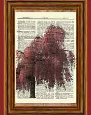 Cherry Blossom Tree Dictionary Art Print Picture Poster Japanese Pink Flowers
