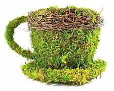 Real Moss Covered Coffee Cup/Saucer Planter