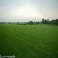 Double Eagle® Centipede Grass Seed 5 Lbs - 10,000 Sq.ft Coverage