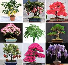 40 SEMI Pachira Maple Mimosa GLICINE SAKURA PINO Pinus MELOGRANI albero dei soldi