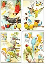 Maxi cards set WWF Czech Republic 2003 Maximum card Birds Parrots