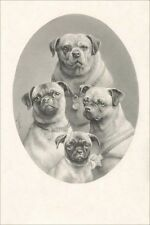 Pug Dog Family Photo Carl Reichert 1890 - LARGE New Blank Note Cards