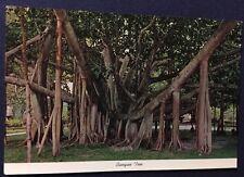 Banyan Tree Vintage Hawaiian Post Card Unposted