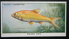 Golden Orfe   Vintage Illustrated Card  VGC