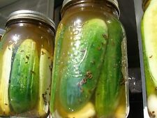National Pickling cucumber  (200 Seeds) heirloom dating back to 1924