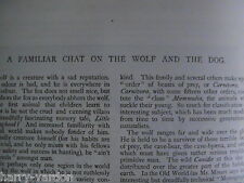 Dog & Wolf Species Wolves Compared Canine Rare Antique Victorian Article 1895