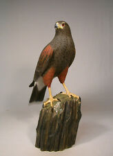 Life Size Harris's Hawk Original Bird Carving/Birdhug