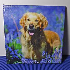 Dekofliese Wandbild Bild Geschenkidee Mitbringsel Golden Retriever (015DP)