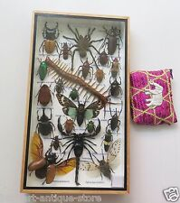 REAL RARE EXOTIC SPIDER SCORPION COLLECTION BUG INSECT TAXIDERMY WOOD FRAME Box