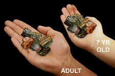 "Fancy Jasper 1"" 5-7 Oz Set of 3 Healing Crystals and Stones Root Chakra"