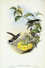 "1990 Vintage HUMMINGBIRD #60 ""BLUE THROATED CAZIQUE"" GOULD COLOR Lithograph"