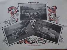 Original 1904 Print AMONG THE LAMBS IN SPRING Lambing B/W Book Illustration