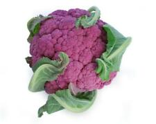 1000mg Sicillian Violet Cauliflower ~450 Seeds ~ Purple Heirloom Brassica Veggie