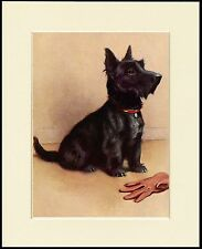 SCOTTISH TERRIER AND MASTERS GLOVE LOVELY DOG PRINT MOUNTED READY TO FRAME