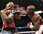 FLOYD MAYWEATHER JR. vs MIGUEL COTTO BOXING FIGHT 8x10 PHOTO