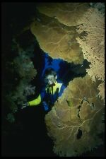 156036 Scuba Diver In Cave With Pacific Sea Fans A4 Photo Print