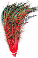 "50 Pcs DYED PEACOCK SWORDS - RED Feathers 15-20"" Costume/Hats/Bridal/Halloween"
