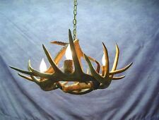 REAL ANTLER WHITETAIL DEER CHANDELIER 4 LAMPS. RUSTIC LIGHTS BY CDN  #U5
