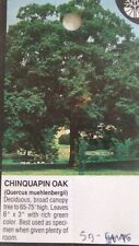 Chinquapin Oak Tree 5 gal. Healthy Shade Trees Home Garden Landscape Large Plant