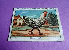 LES POULES BRAEKEL CHROMO CHOCOLAT PUPIER JOLIES IMAGES 1930