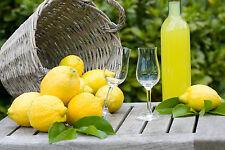 5 fresh seeds from lemon tree in SORRENTO (Italy) 5 seeds - very good lemons