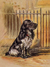 COCKER SPANIEL CHARMING DOG GREETINGS NOTE CARD BEAUTIFUL BLUE ROAN SITS BY GATE