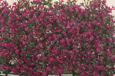 Artificial Fuschia Fake Flower Mat Patio Hedge Plant Grass Lawn Turf Topiary
