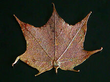 """Lovely Copper Plated Maple Leaf Pendant Autumn Leaves Fall Large 4"""""""