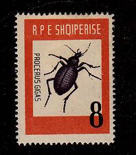 Albania - 1963-SC 662-H-Beetle-Procerus gigas