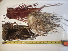 3 BROWN DUN GRIZZLY VARIANT ROOSTER SADDLE HACKLES BASS CRAFT HAIR FEATHERS #3